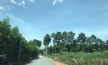 Đất tại UBND xã Tân Hiệp, Long Thành, mua đất đầu tư đón đầu xu thế .