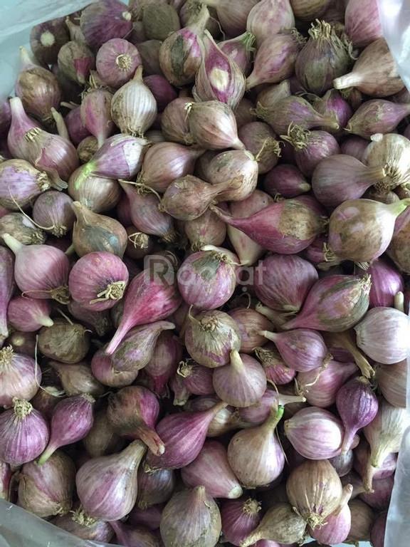 Các loại hạt giống nhập khẩu