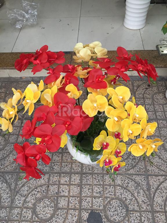 Hoa lan Giấy