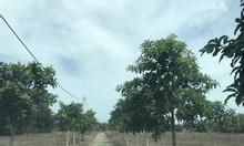 Bán 1 mẫu đất tại Bàu Cạn, gần cổng số 3 sân bay Long Thành