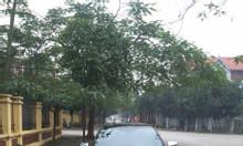 Atis 2011 số sàn
