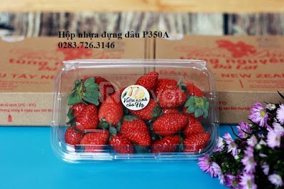 Hộp nhựa đựng trái cây mua ở đâu tại TP.Hồ Chí Minh