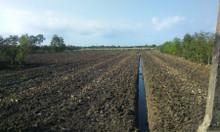 Cho thuê 2 khu đất đẹp tại Bến Lức - Long An - thuê dài hạn