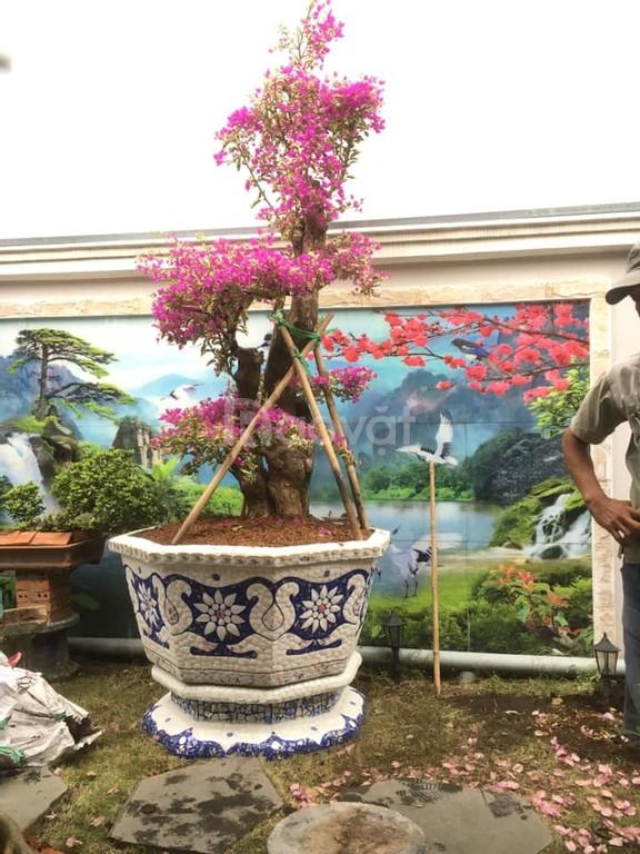 Cơ sở chậu hoa thế sơn - chậu hoa dán sành sứ - chậu khảm sành