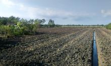 Cho thuê đất tại Bến Lức Long An