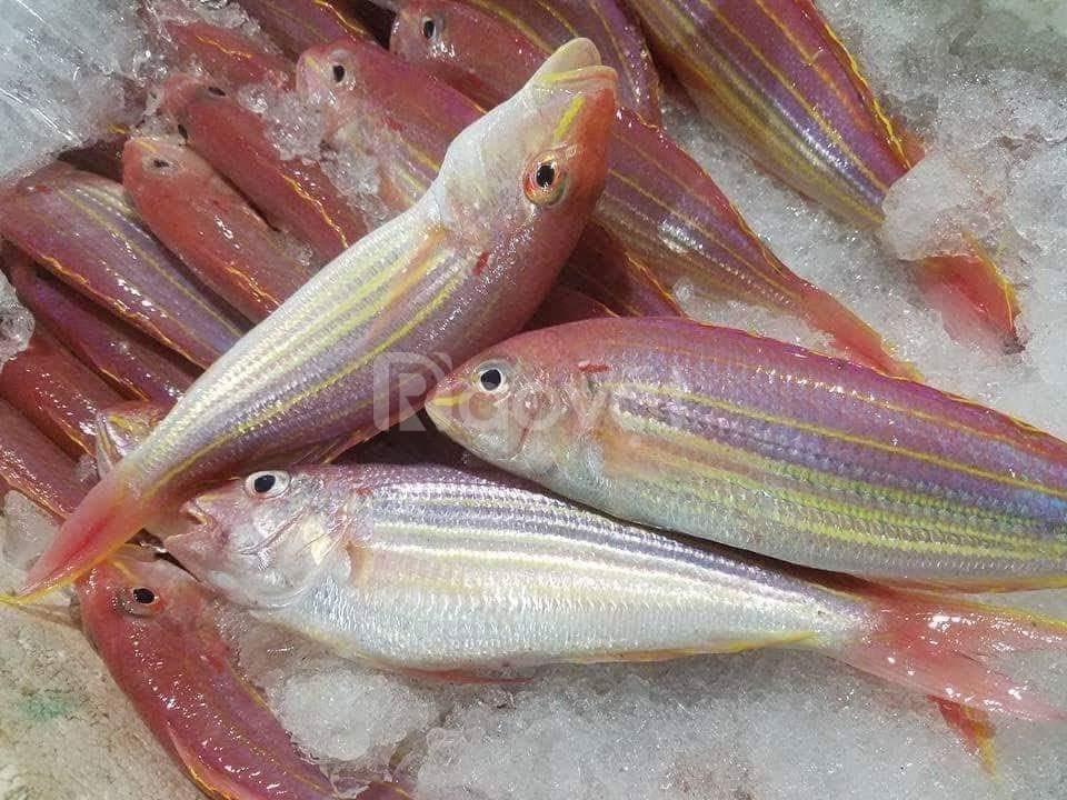 Cá Đổng ngon chất lượng - giá tốt