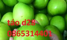 Kỹ thuật trồng và chăm sóc cây táo, áp dụng cho tất cả loại táo trồng