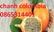Chanh leo ngọt colombia, giống chanh cho trái màu vàng