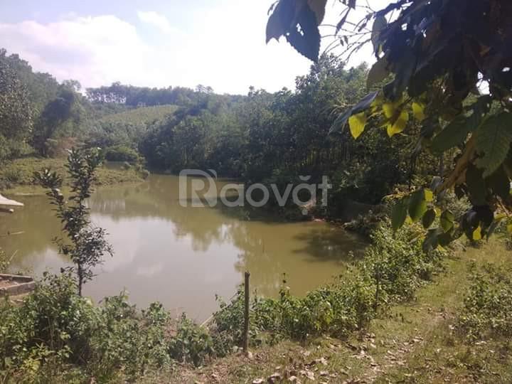 Chính chủ cần chuyển nhượng đất trang trại tại xã Dân Hạ, huyện Kỳ Sơn