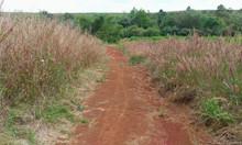 Bán lô đất vườn rộng 2,4 ha tại xã Sông Xoài, Phú Mỹ, Bà Rịa Vũng Tàu