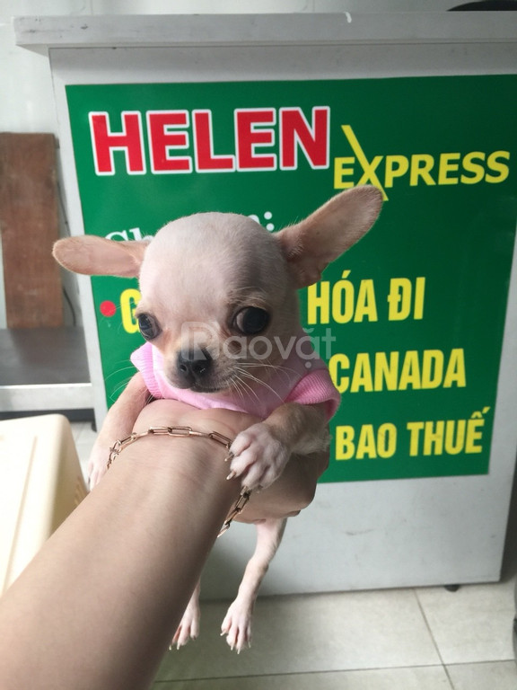 Dịch vụ gửi thú cưng Tp HCM tại Helen Express