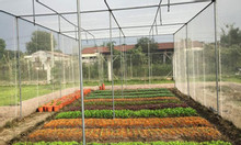 Báo giá lưới trồng rau sạch, các mô hình nhà lưới trồng rau hiện nay