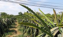 Bán đất mặt tiền QL1A, km 24 Hàm Minh, Hàm Thuận Nam