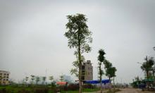 Chính chủ liền kề B1.4 ô góc vườn hoa Thanh Hà Mường Thanh rẻ