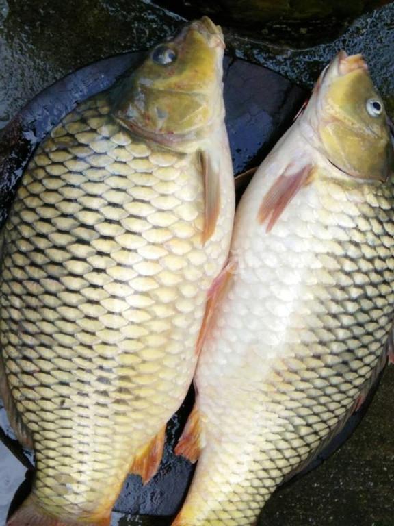 Bộ 3 hương liệu dụ cá - kích thích cá ham ăn