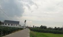 Bán 3500m2 đất Bình Thủy, Bình Quới, Châu Thành