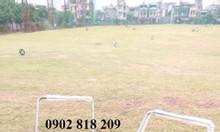 Xe nhặt bóng golf 1 rổ XD01