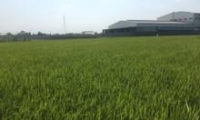 Bán 7,2 công đất nông nghiệp Tân Trụ - thích hợp trồng thanh long
