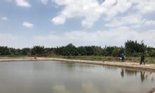 Bán nóng quĩ đất lớn 7000m2, giá 530tr/1000m2 Hiệp Phước, Nhà Bè