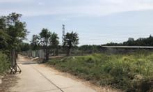 1400m2 đất thổ vườn, Phạm Hữu Lầu giá chỉ 7,8tỷ bao giá đẹp