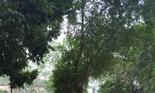 Cho thuê 550m2 đất  phố Thạch Cầu, Long Biên gần cầu Chương Dương