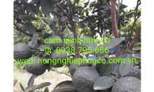 Rau rừng, trái cây hữu cơ sạch