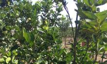Bán đất vườn trang trại 7445m2, xã Bình Lộc, Long Khánh, Đồng Nai