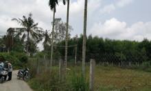 Bán 210m2 đất thổ cư nghĩa kỳ tặng 131m2 đất trồng cây