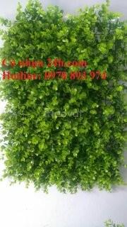 Cỏ trang trí tường, cỏ trang trí sân vườn giá rẻ tại Quảng Ninh