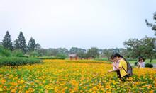 Biệt  thự  200m khu sinh thái Đan Phượng - The Phoenix Garden