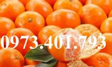 Nguồn gốc cây cam đường canh bắt nguồn từ đâu