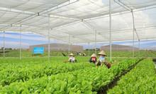 Mô hình nhà lưới trồng rau, mô hình nhà lưới giá rẻ.