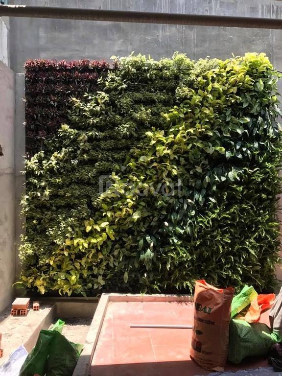 Thi công vườn tường xanh cho chung cư