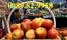 Bán giỏ đựng quà tết 2020, bán buôn bán lẻ giá xưởng