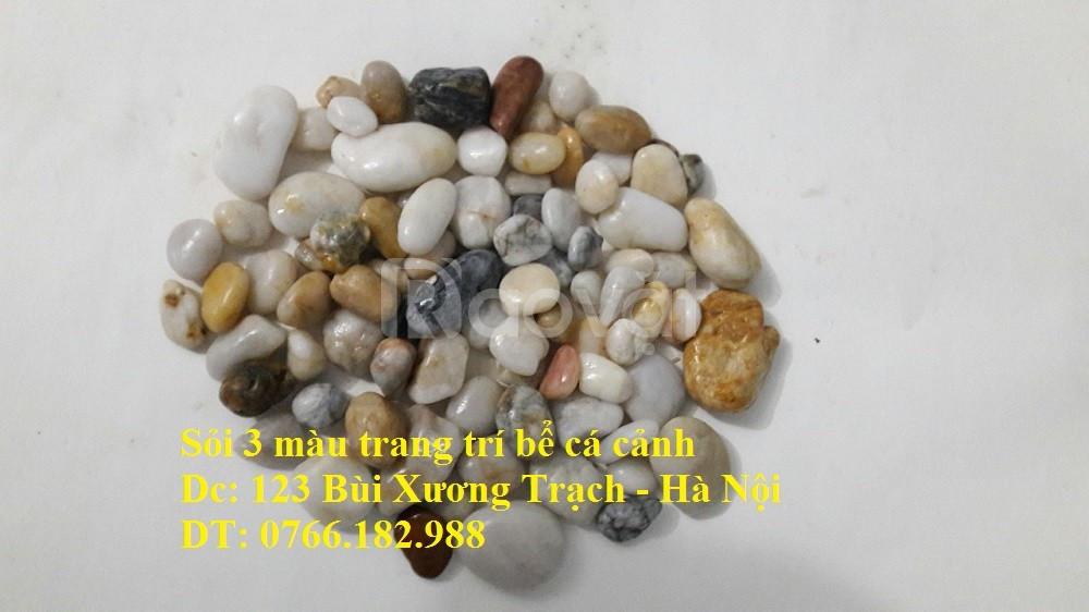 Bán sỏi trang trí bể cá tại Hà Nội