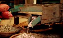 Cung cấp bánh dầu số lượng lớn