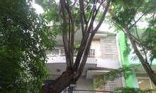 Cho thuê nhà phố khu Hưng Gia, Phú Mỹ Hưng 5PN, nhà đẹp giá rẻ