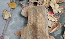 Bán gỗ hóa thạch, cổ vật sưu tầm trang trí