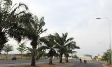 Mở bán dự án đất thổ cư Aeon New City giai đoạn F1
