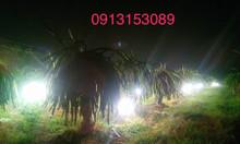 Đất chính chủ khu vực Tân Hưng, Tân Châu giáp ranh thành phố Tây Ninh