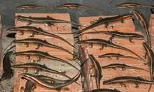 Bán rắn mối thịt, rắn mối động lạnh, miến phí giao hàng tại TPHCM.