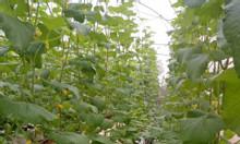 Tuyển 2 công nhân làm nông nghiệp