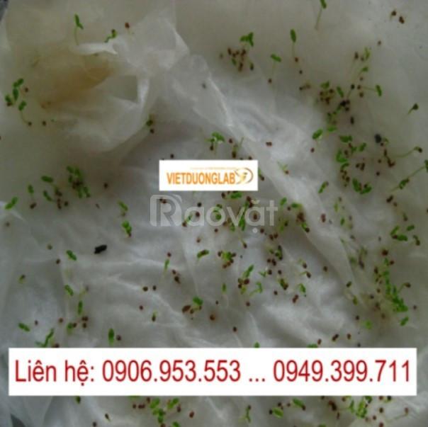 Giấy nẩy mầm Seedburo 400PT