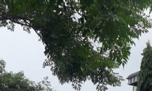 Bán đất thị trấn Chúc Sơn, Chương Mỹ, giá đầu tư 3,5 triệu/m2.