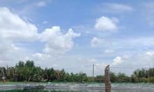 Cần bán gấp đất trồng cây lâu năm tại xã Hiệp Phước, huyện Nhà Bè
