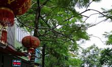 Nhà đẹp Vũ Tông Phan, Hoàng Mai, 90mx5T, 13.8 Tỷ.