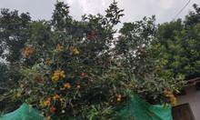Cần bán vườn trái cây diện tích lớn tại TP. Long Khánh ĐN