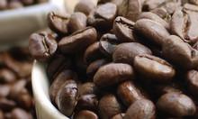 Cà phê nguyên chất cung cấp giá sỉ tại Bà Rịa - Vũng Tàu
