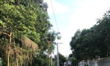 Đất 230m2 sổ hồng, cổng sau khu công nghiệp, kế thị trấn Dầu Giây