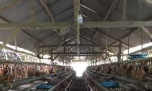 Bán trang trại rộng gần 8 hecta, cách thành phố Nha Trang chỉ 15km.